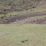 Degradación de la vegetación natural y del suelo por ganadería extensiva de caprinos y ovinos.