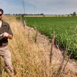 Agriculturización: contraste entre cultivo de soja y borde sin disturbar.