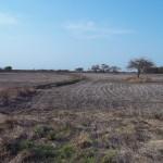 Desmonte para agricultura, suelos en producción agrícola de alta erodabilidad y falta de rotaciones adecuadas.