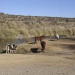 Degradación de tierras por mal manejo ganadero.
