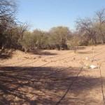 Sistema de riego para la reforestación de bosque nativo (algarrobo).