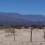 Área desmontada con muy baja cobertura vegetal y erosión eólica al norte de San Carlos, provincia de Salta.