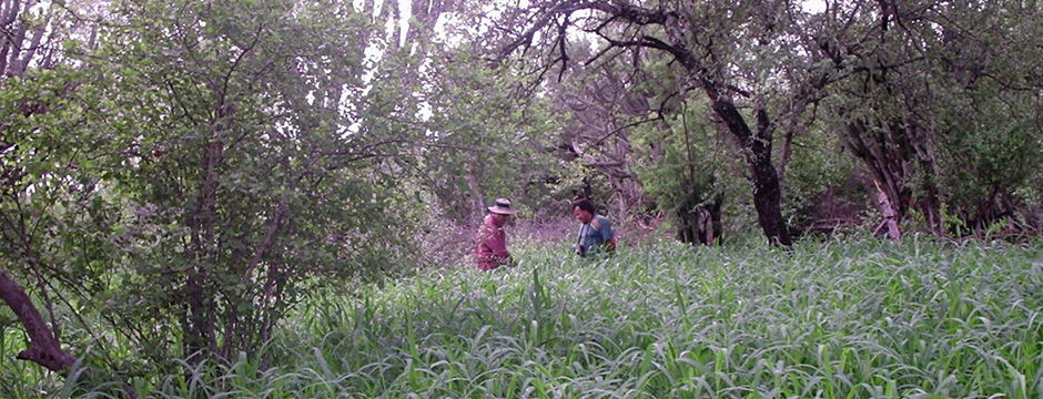 pasturas-bosque-chaco-semiarido(940x360)