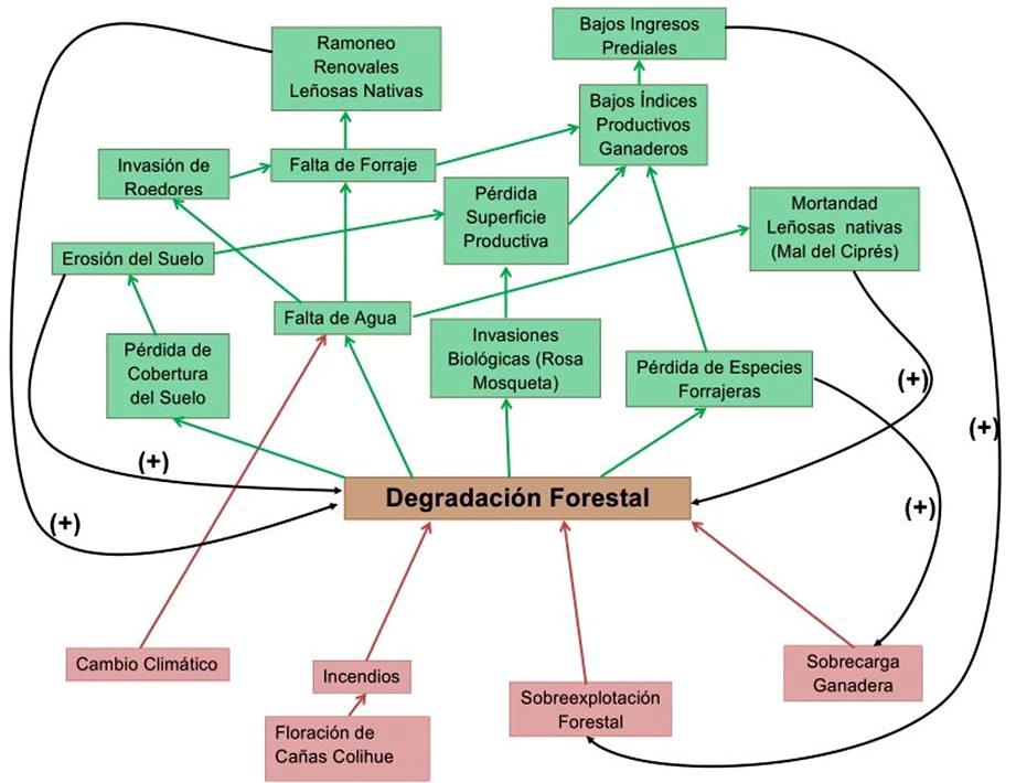 INTA Carrenleufu - Problemas vinculados de la degradación forestal en el área de Carrenleufú